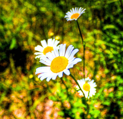 Photograph - Wild Flowers by Jonny D
