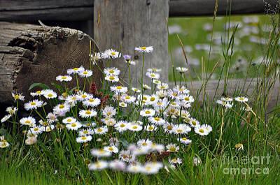 Photograph - Wild Flowers  by Juls Adams