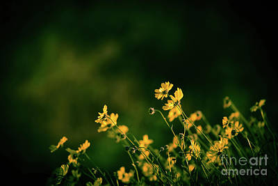 Art Print featuring the photograph Wild Flowers by Kelly Wade
