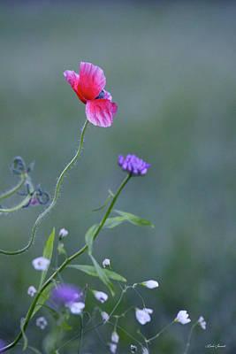 Photograph - Wild Flowers by Linda Sannuti