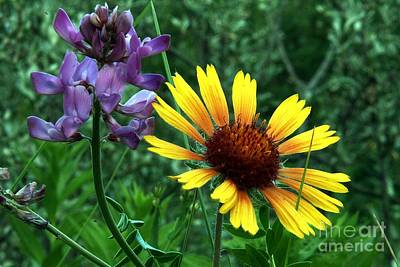 Photograph - Wild Flowers by Mario Brenes Simon