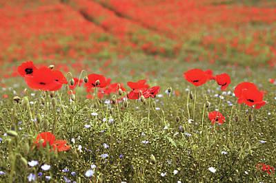 Daisy Photograph - Wild Flowers Number Three by Mark Rogan