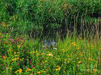Photograph - Wild Flowers On Birkdale Common By The Streamlet by Joan-Violet Stretch