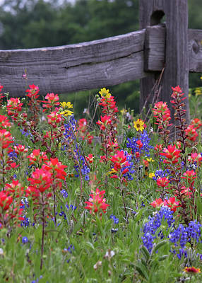 Robert Bellomy Royalty-Free and Rights-Managed Images - Wild Flowers by Robert Bellomy