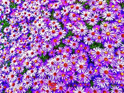 Photograph - Wild Flowers  by Tom Jelen