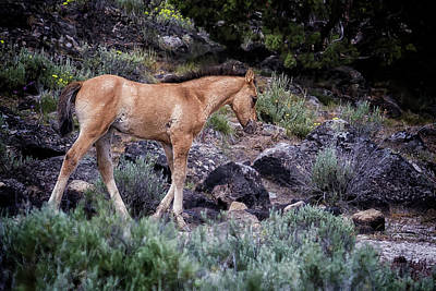 Photograph - Wild Foal by Belinda Greb