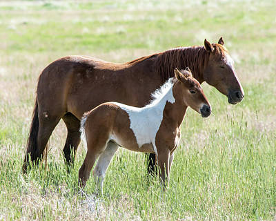 Art Print featuring the photograph Wild Foal With A Horse Pattern  by Mary Hone