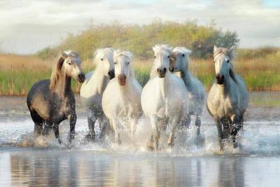 Photograph - Wild Friends by Karen Lynch