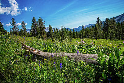 Photograph - Wild Garden In The High Country by Lynn Bauer