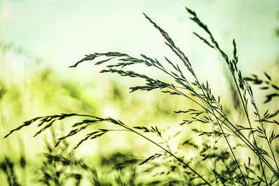Photograph - Wild Grass Blades by Stuart Litoff