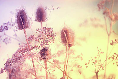 Photograph - Wild Grass Surya Namaskar by Jenny Rainbow