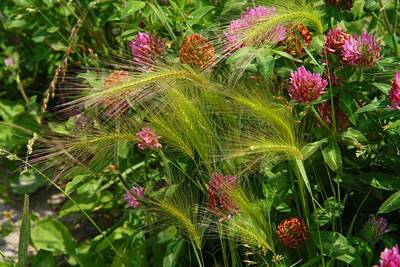 Photograph - Wild Grasses And Red Clover by Kathryn Meyer