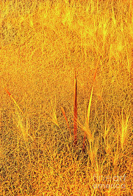 Photograph - Wild Grasses Autumn Mono Lake State Park California by Dave Welling