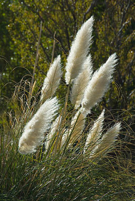 Photograph - Wild Grasses by Harry Spitz