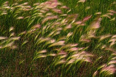 Photograph - Wild Grasses by Kathryn Meyer
