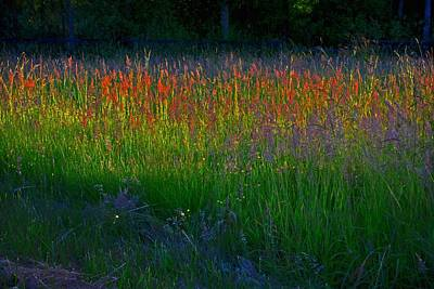 Photograph - Wild Grasses by Theresa Pausch