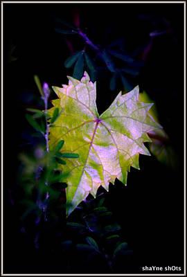 Photograph - Wild Heart by Shayne Johnson Fleming