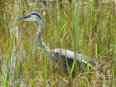 Photograph - Wild Heron Country by Judy Kay