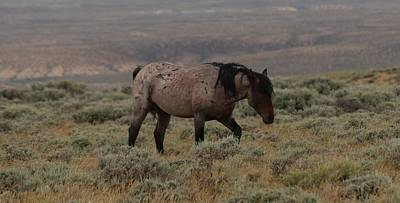 Photograph - Wild Horse 2 by Christy Pooschke