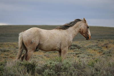Photograph - Wild Horse 5  by Christy Pooschke