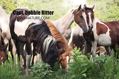 Photograph - Wild Horse 8519 by Captain Debbie Ritter