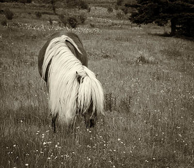 Photograph - Wild Horse At Grayson Highlands - Sepia by Joye Ardyn Durham