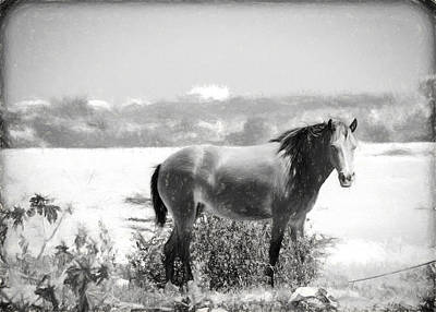 Photograph - Wild Horse by Bill Howard