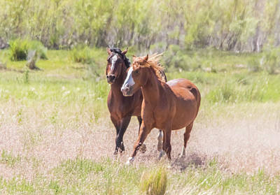Photograph - Wild Horse Chase by Marc Crumpler