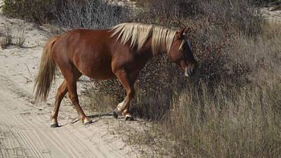 Photograph - Wild Horse Corolla  by Joyce Wasser