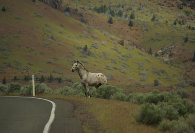 Photograph - Wild Horse Crossing by Dale Stillman