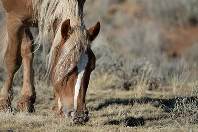 Photograph - Wild Horse by Frank Madia