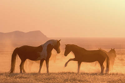 Photograph - Wild Horse Glow by Wesley Aston