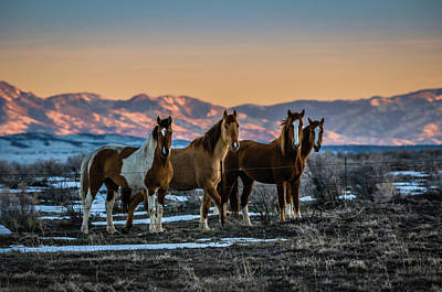Photograph - Wild Horse Group by Bryan Carter