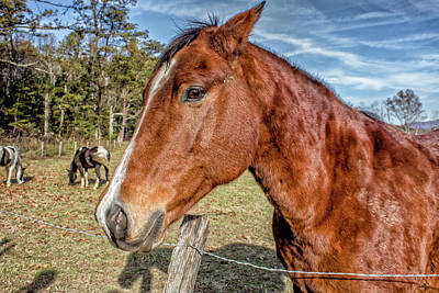 Wild Horse In Smoky Mountain National Park Art Print by Peter Ciro