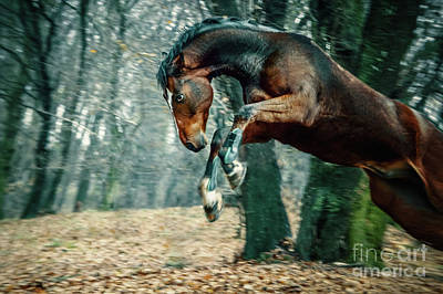 Photograph - Wild Horse Jumping by Dimitar Hristov