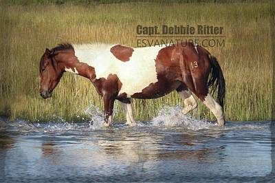 Photograph - Wild Horse Marguerite 9481 by Captain Debbie Ritter