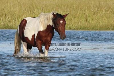 Photograph - Wild Horse Maverick 9317 by Captain Debbie Ritter