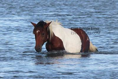 Photograph - Wild Horse Maverick 9407 by Captain Debbie Ritter