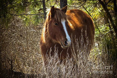 Photograph - Wild Horse Of Assateague  by Dawn Gari