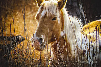 Photograph - Wild Horse Of Chincoteague by Dawn Gari