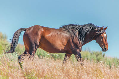 Photograph - Wild Horse On A Hillside by Marc Crumpler
