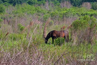 Photograph - Wild Horse On The Prairie by D Hackett