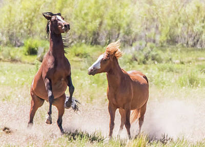 Photograph - Wild Horse On Two Legs by Marc Crumpler