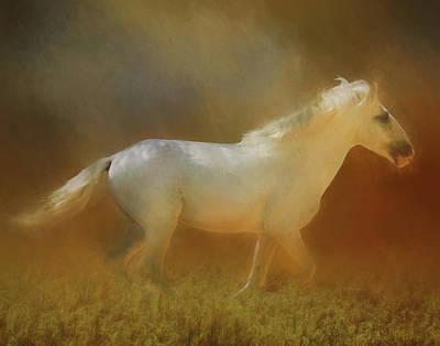 Photograph - Wild Horse Run by Gloria Anderson