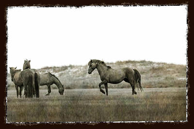 Photograph - Wild Horse Series - Alpha Stallion Communication With The Band by Dan Friend