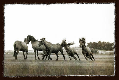 Photograph - Wild Horse Series  - Chasing His Rival by Dan Friend