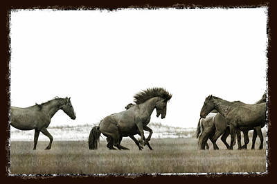 Photograph - Wild Horse Series - Going After The Competition by Dan Friend