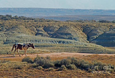 Photograph - Wild Horse-signed-#2439 by J L Woody Wooden