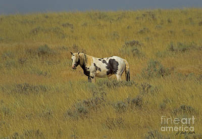 Photograph - Wild Horse-signed-#8695 by J L Woody Wooden
