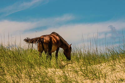Photograph - Wild Horse And Dragon Flies by Skip Tribby